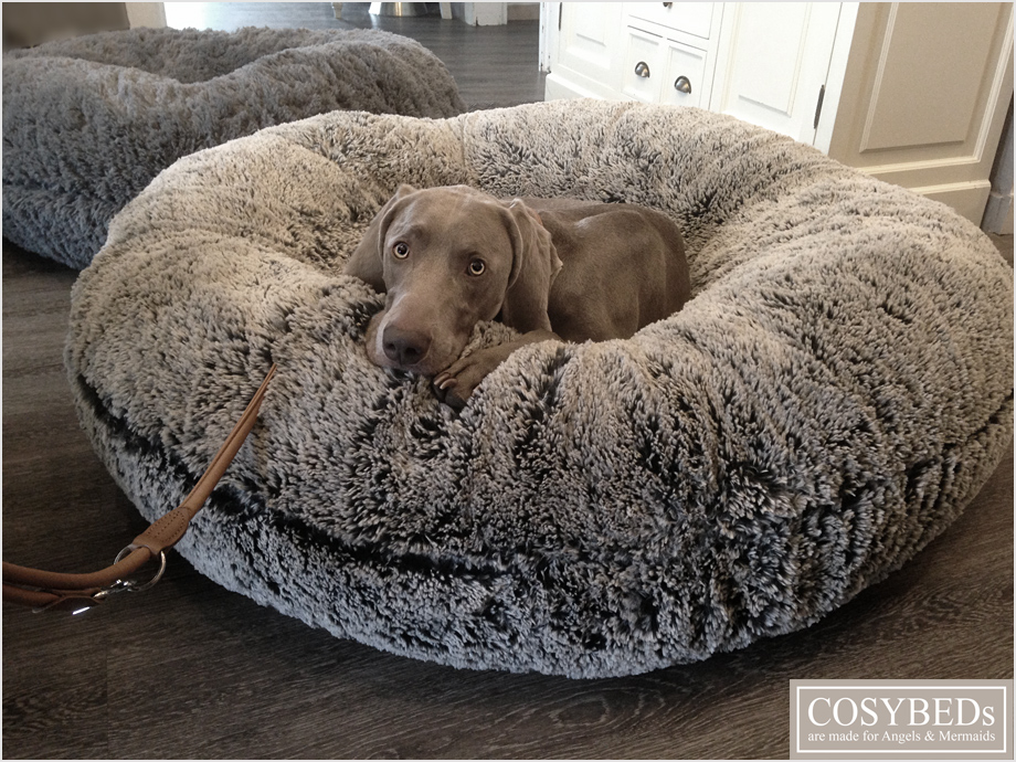Dogs Air Bed